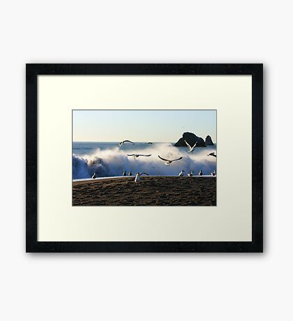 Sea Flight Framed Print