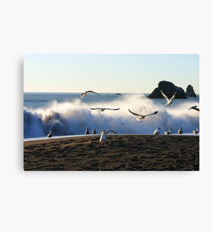 Sea Flight Canvas Print