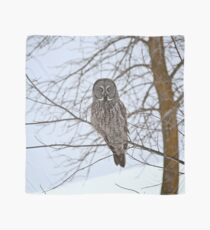 Great Gray Owl, your news and weather at 11 Scarf