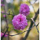 Blossom Frame by jayneeldred