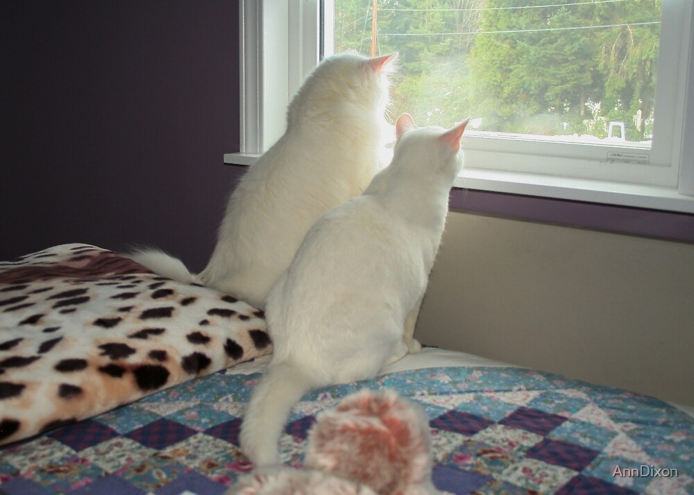 I'll Look for that Mouse, You Look for Birds by AnnDixon