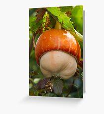 a beautiful pumpkin Greeting Card
