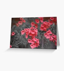 Salmon Pink Flowers Greeting Card