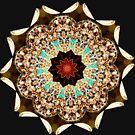 Star  by Paul Reay