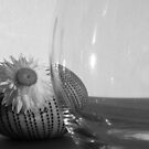 Flower, glass, and shadows by Heather Thorsen