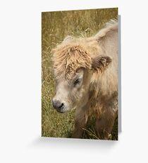 Highland Cattle Calf Greeting Card
