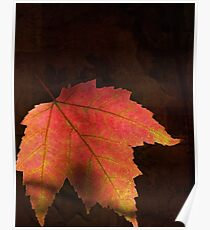 Shadows On Maple Leaf Poster