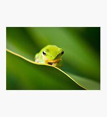 Dwarf Tree Frog Photographic Print