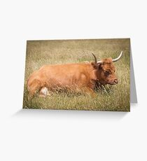 Highland Cattle Cow Greeting Card