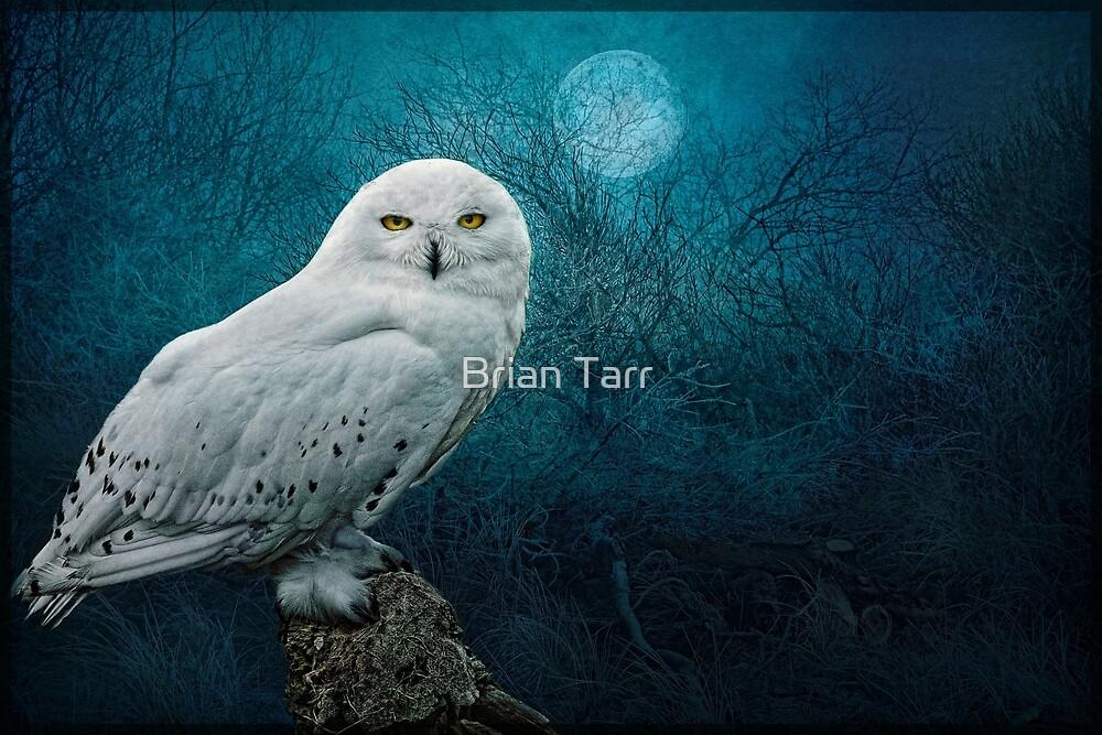 Night Owl by Brian Tarr