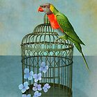 The Parrot by Sarah Jarrett