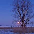 Winter Tree at Twilight by lorilee