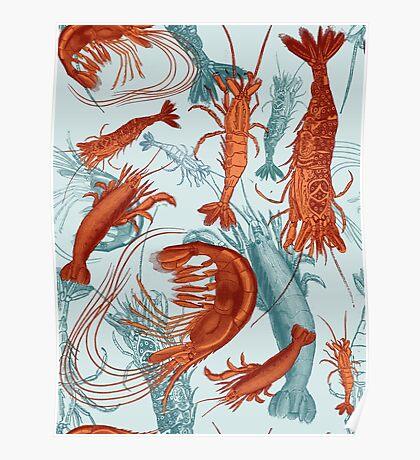 Shrimp - Orange and Turquoise Poster