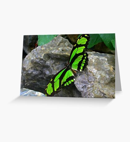 Green butterfly  on Rock Greeting Card