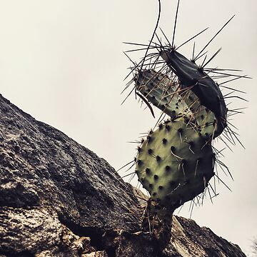 Cactus by chasensmith