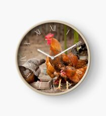 Rhode Island Red chickens posing Clock