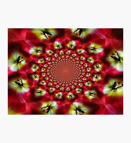 Kaleidoscope Tulip Photographic Print