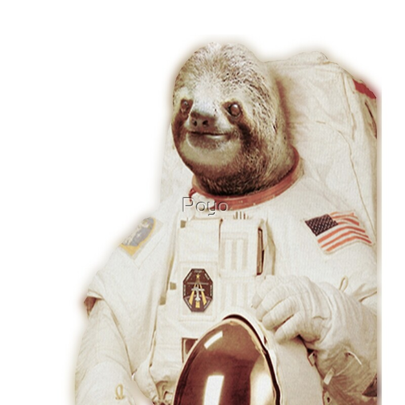 sloth astronaut picture - 800×800