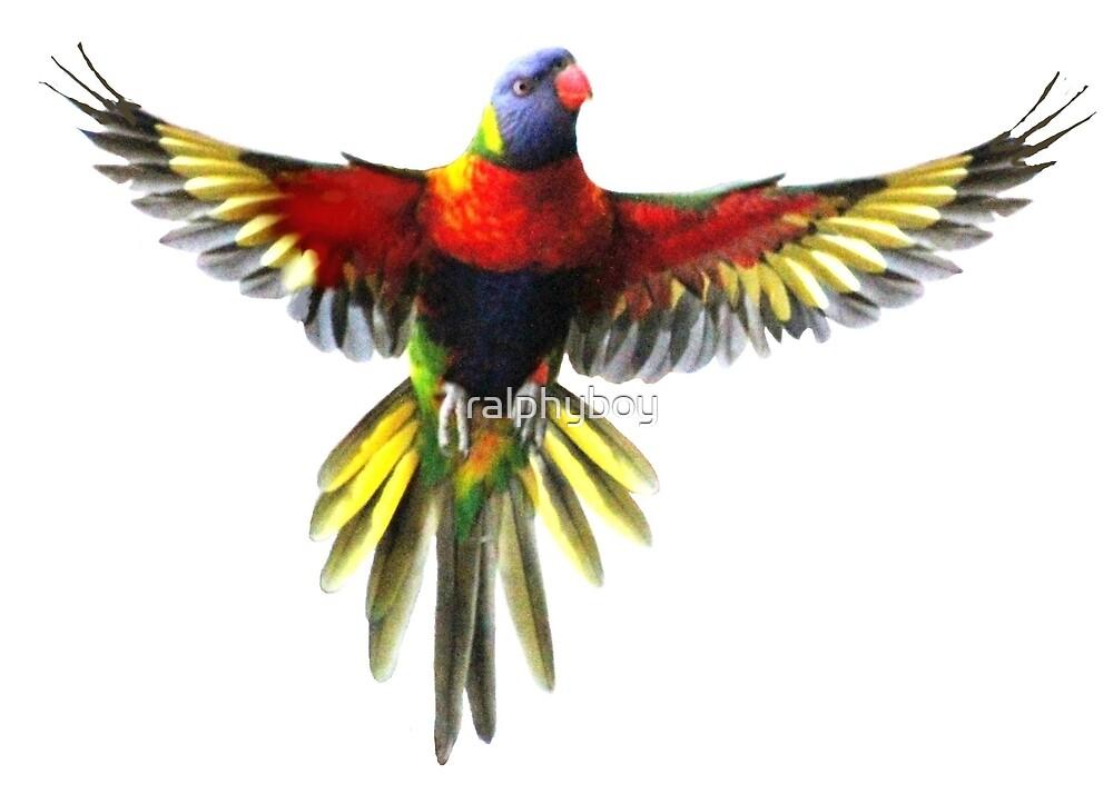 the rainbow lorikeet by ralphyboy