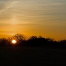 Sunset and Trees by Sue Robinson