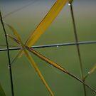 Hay geometry by Tiina M Niskanen