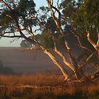 Light on the Gums by Christine Smith