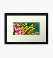 Close up flowers Framed Print