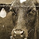Wet Cow by Michelle DuBose