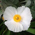 Coromandel Bloom by Gail Mew