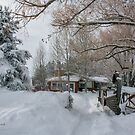 Just another's winter's day by Charlene Aycock