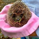 Tiny Hedgehog In A Hat  by fiat777