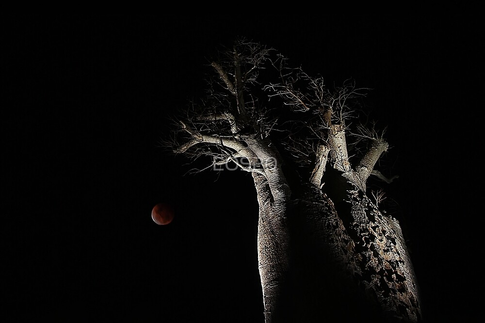 The Blood Moon And The Boab Tree by EOS20
