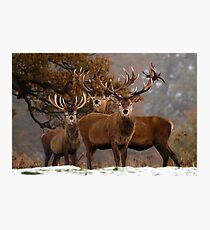 Family Portrait - Red Deer Photographic Print
