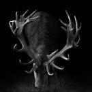 Deer on Black by George Wheelhouse
