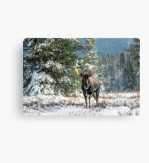 Canadian Western Bull Moose Metal Print