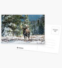 Canadian Western Bull Moose Postcards