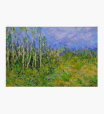 birch trees landscape Photographic Print