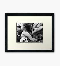 Geranium Mish Mash Framed Print