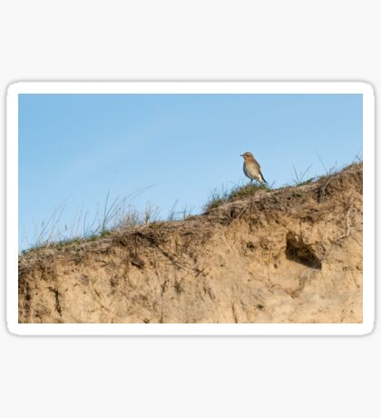 Northern wheatear on top of a dune Sticker