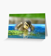 Daffy Duck Loving Life - NZ Greeting Card