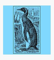 Vintage Penguin Art on Blue Photographic Print