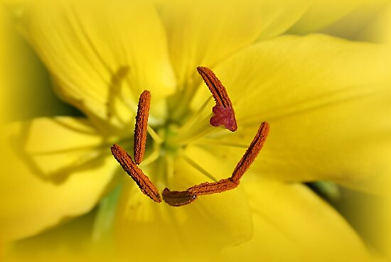 Happy Lily by Stephen Thomas