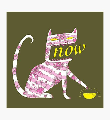 Now Cat Photographic Print