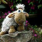 Antipodean Herdwick.........! by Roy  Massicks
