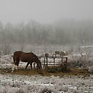 Winter Pasture by Rachel Leigh