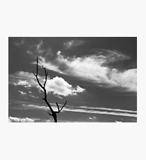 Dead tree with wispy clouds Photographic Print