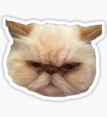 ABBA the cat  Sticker