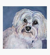 POOCH SMOOCH SWEET WHITE SHAGGY PUP Photographic Print