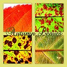 Autumn Leaf Selection by ©The Creative  Minds