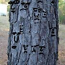 person tree bark by Stacey Lazarus